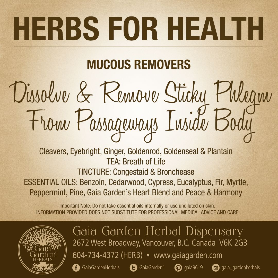 HERBS FOR HEALTH: MUCOUS REMOVERS Dissolve & Remove Sticky Phlegm