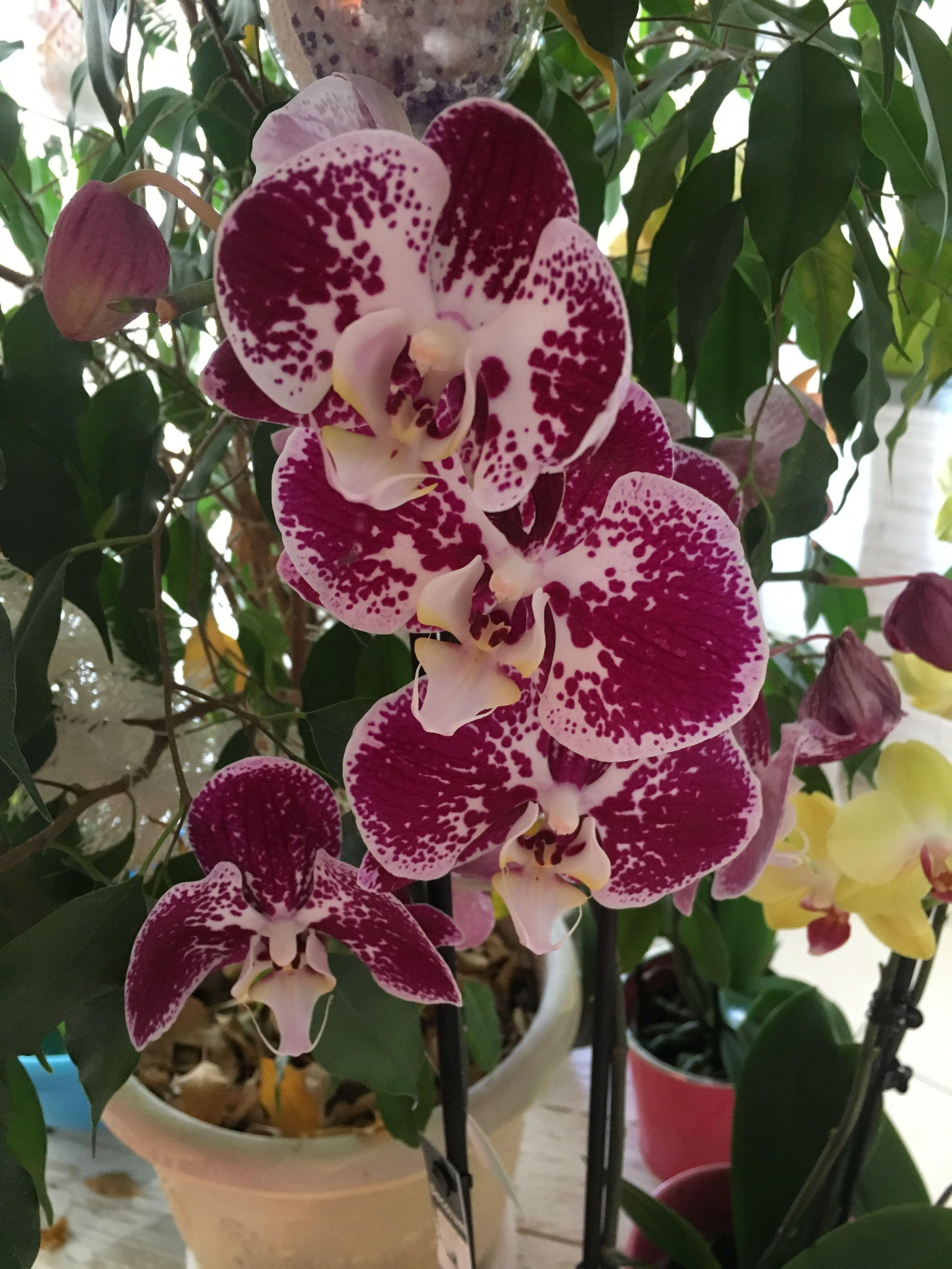 Image par Smart sur Orchidées Orchidée, Planter des