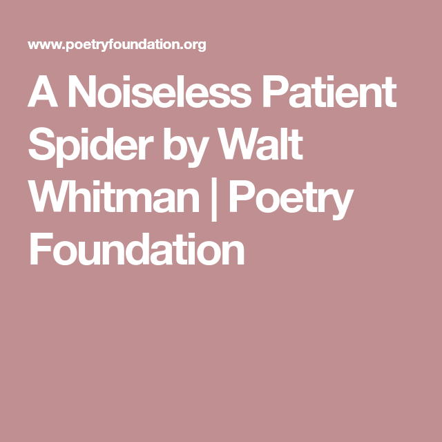 the noiseless patient spider