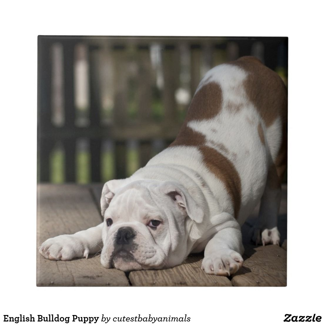 English Bulldog Puppy Tile Zazzle Com Bulldog Puppies Baby