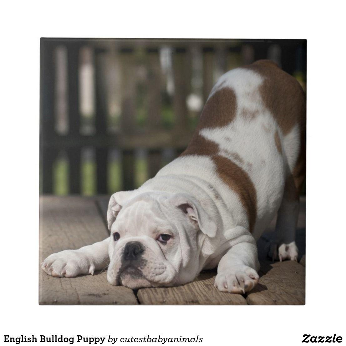 English Bulldog Puppy Tile Zazzle Com Bulldog Puppies Baby
