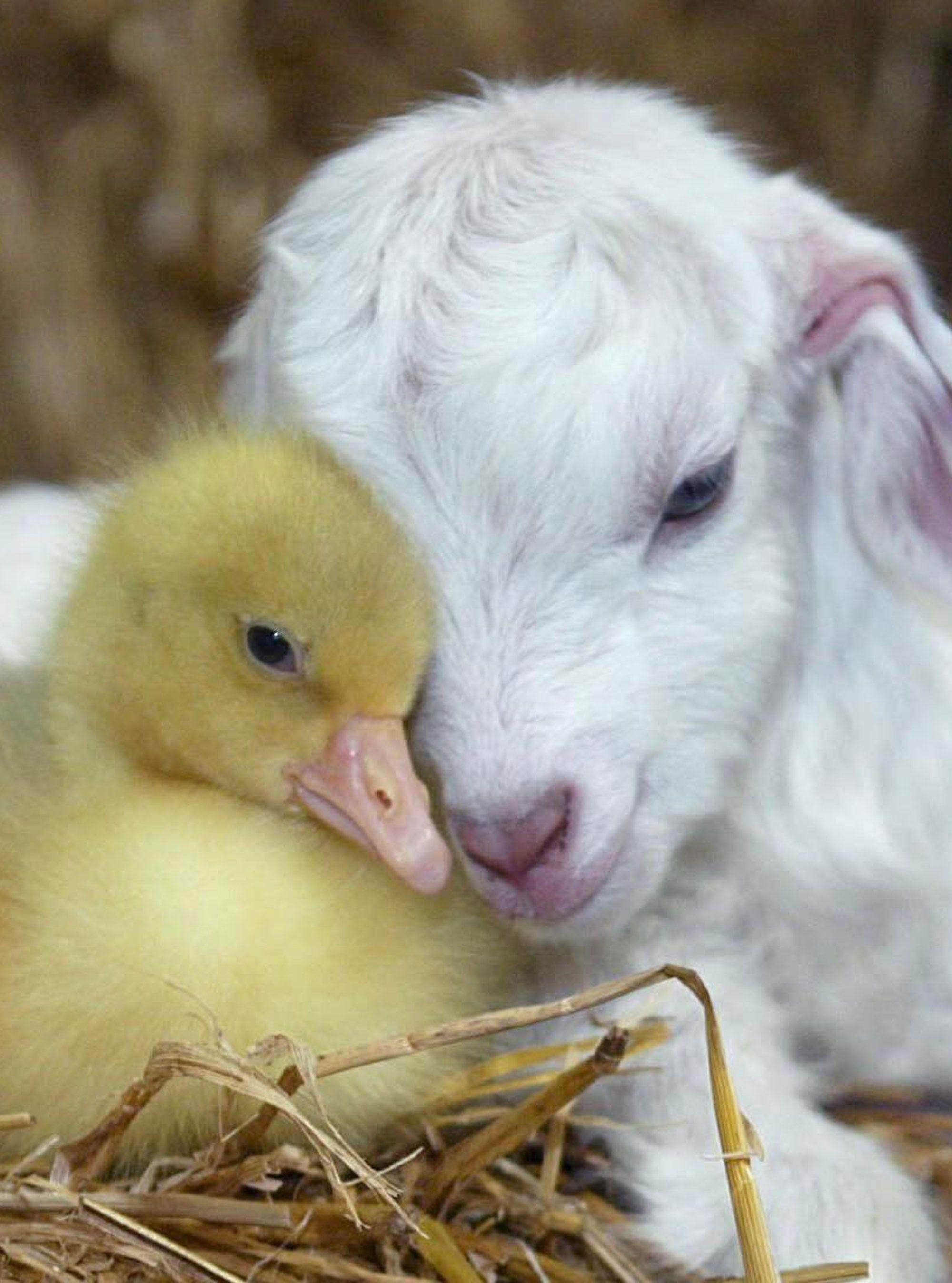 Spring Baby Animals Animals friendship, Cute animals