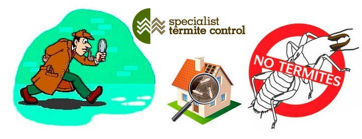 termite repair specialists