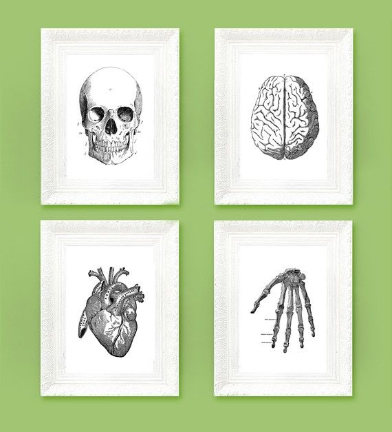 My Husband Loves These I Love Vintage Anatomy Prints Decorate