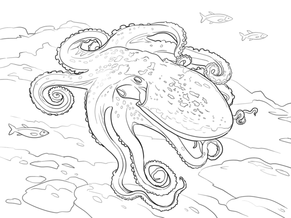 Curled Octopus Coloring page   Favorites for Shana   Pinterest