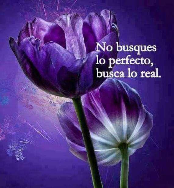 Lindas Imagenes Con Flores Con Frases Y Mensajes Para Reflexionar