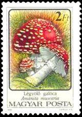 Znaczek: Amanita muscaria (Węgry) (Mushrooms (1986)) Mi:HU 3872A,Sn:HU 3048,Yt:HU 3082