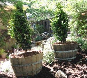 Half Wine Barrels Planting 101 Patio Ideas Pinterest Wine