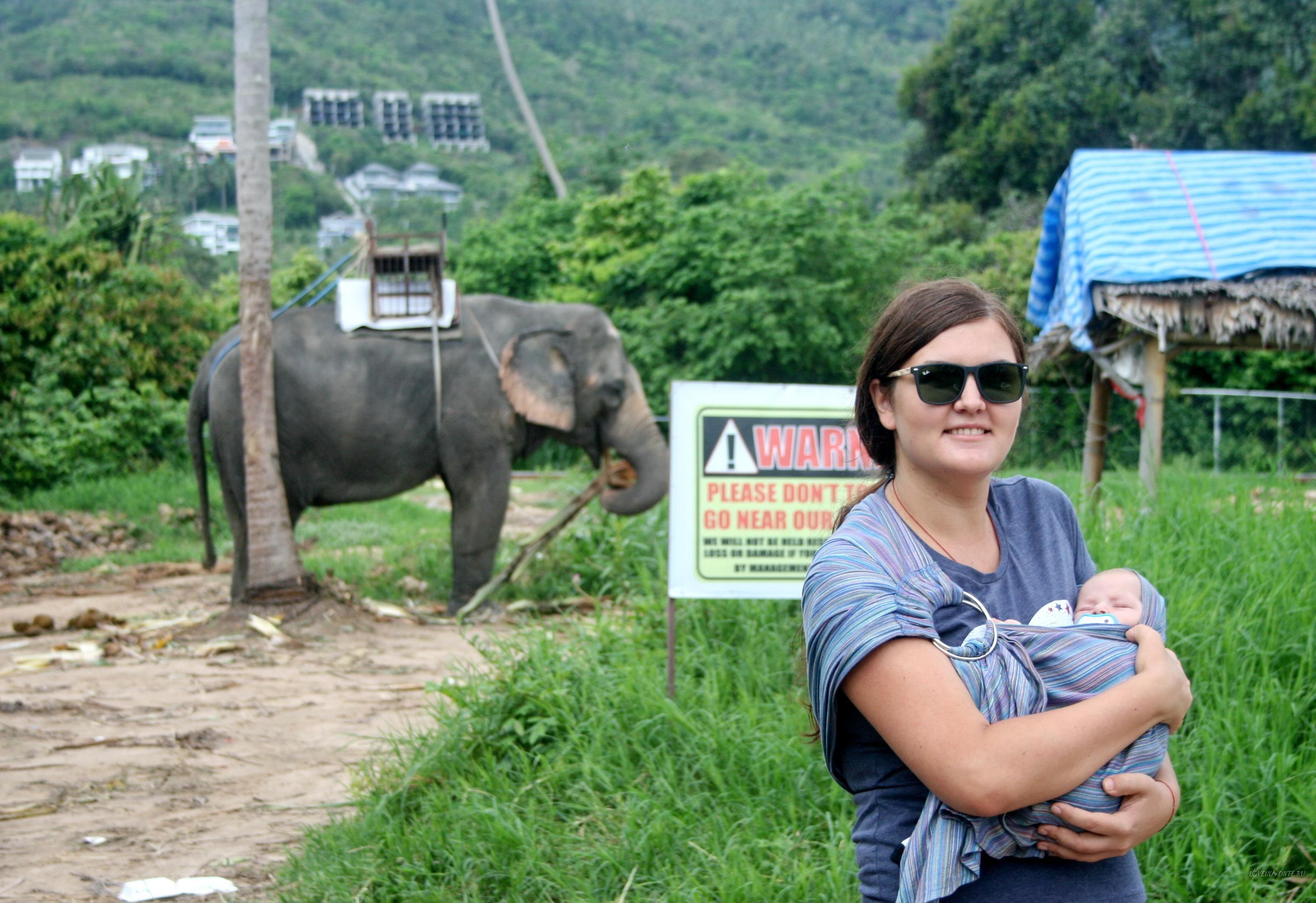 Слоны на Бопуте http://loveinmonte.ru/slony-na-bophute.html