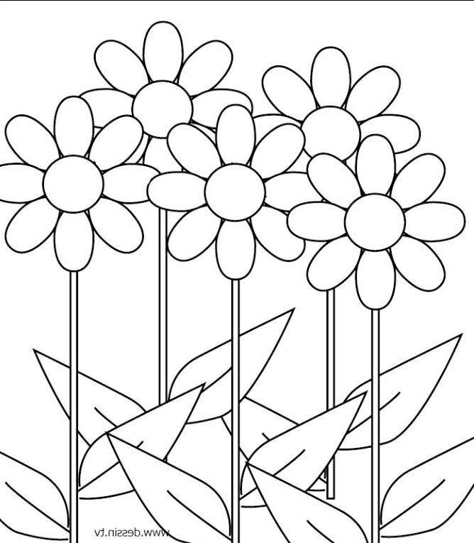 Gambar Bunga Hitam Putih Gambar Bunga