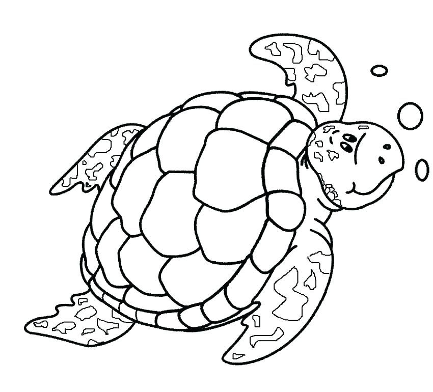 Drawing Sea Turtle Coloring Page Cute Printable Template Baby