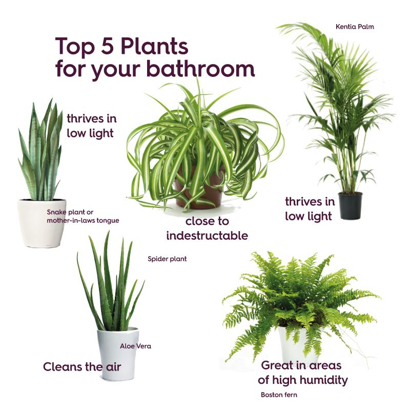 Give green a go in your bathroom