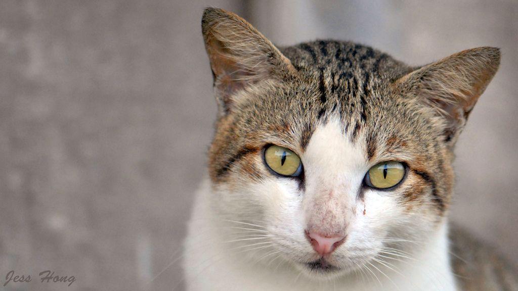 Sombong Cat | by JeSsHonG