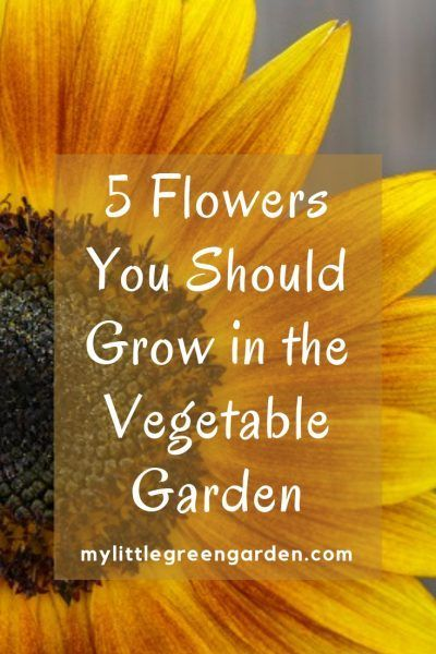 5 Flowers You Should Grow in the Vegetable Garden - My Little Green Garden
