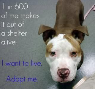 Statistics that should shock you....1 in 600 of me makes it out of a shelter alive - adopt, adopt, adopt.....