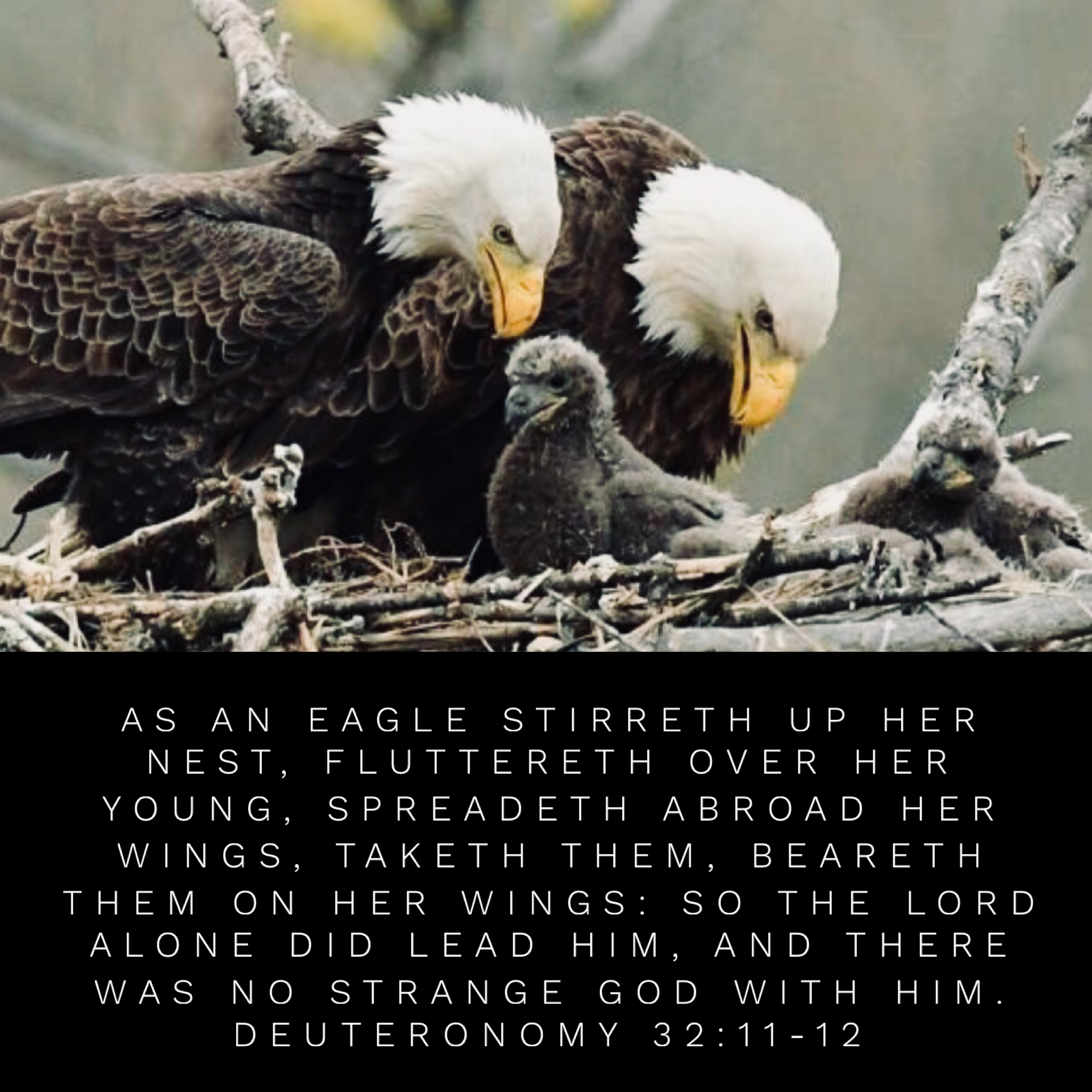 Image result for The eagle stirreth up the nest