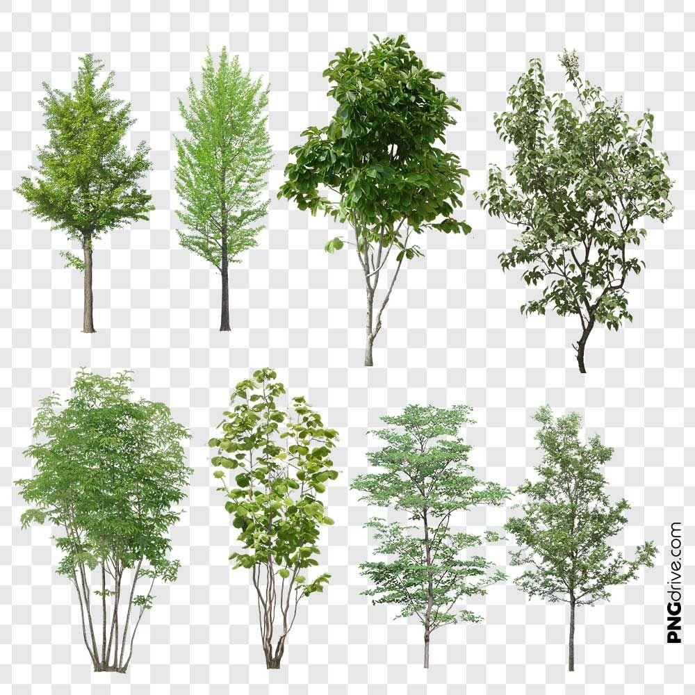 Hi Quality 8 Set Of Trees Png Image Tree Photoshop Photoshop Landscape Architecture Collage