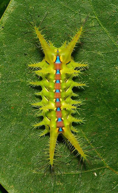 Pin Von Monika Bastelfreundin Auf Schmetterlinge Motten Insekten Tiere Bunte Tiere