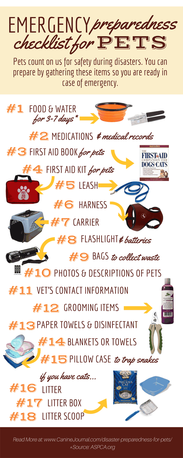 5 Things That Should Be In Your Earthquake Bag