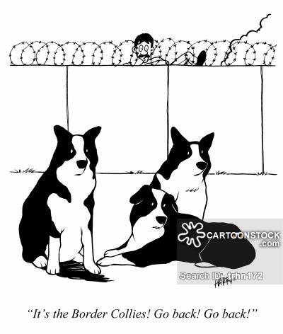 border collie cartoons - Google Search