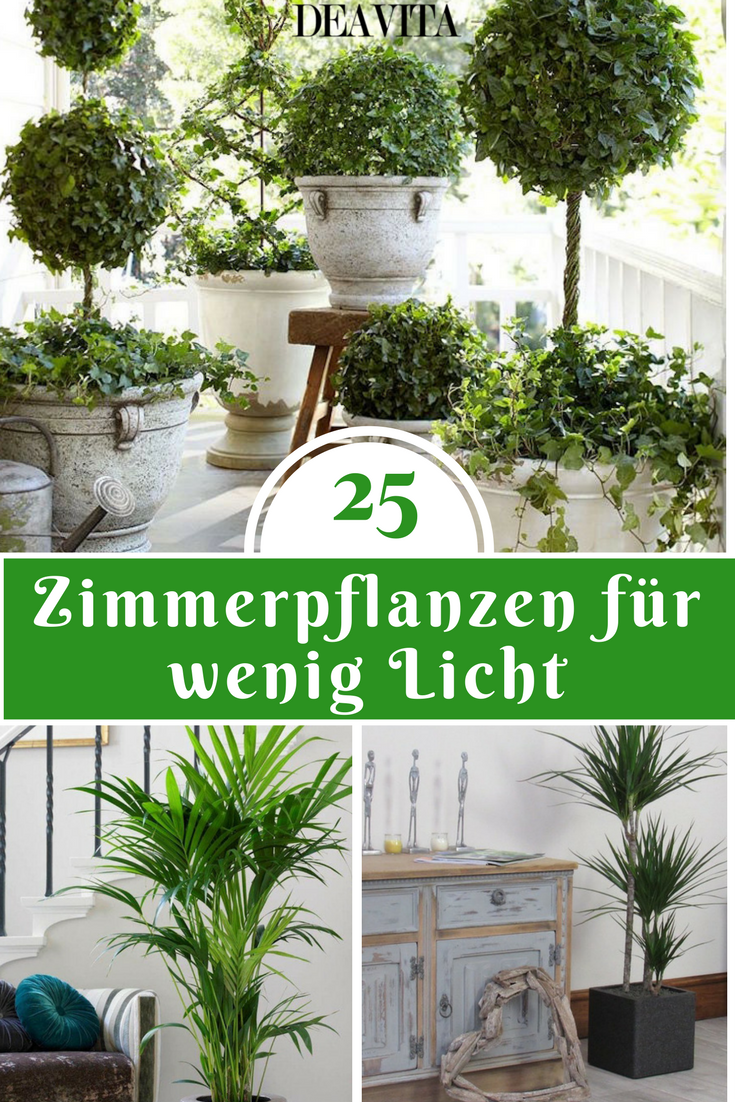 Die wunderbare Atmosphäre, die die Zimmerpflanzen schaffen, möchten ...