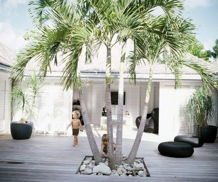 Palm Growing Through Weathered Timber Decking And