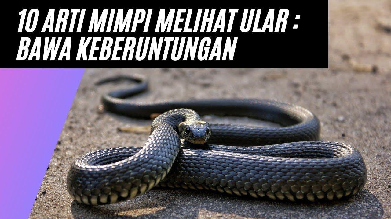 11 Mimpi melihat ular dalam togel info