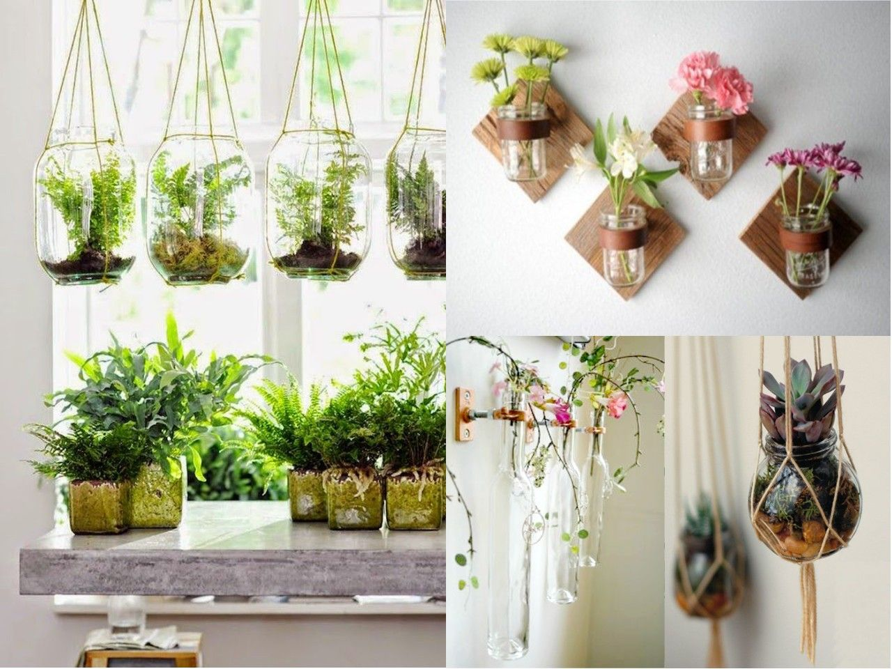 Plantas colgantes para interiores decoraci n del hogar for Decoracion con plantas crasas
