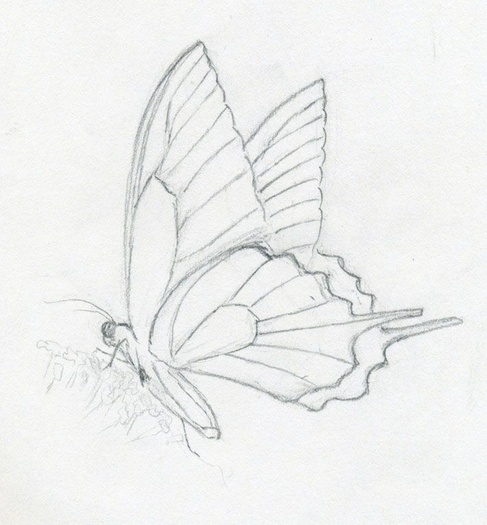 Mariposas Croquis De Las Aves In 2020 Butterfly Sketch Butterfly Drawing Butterfly Art