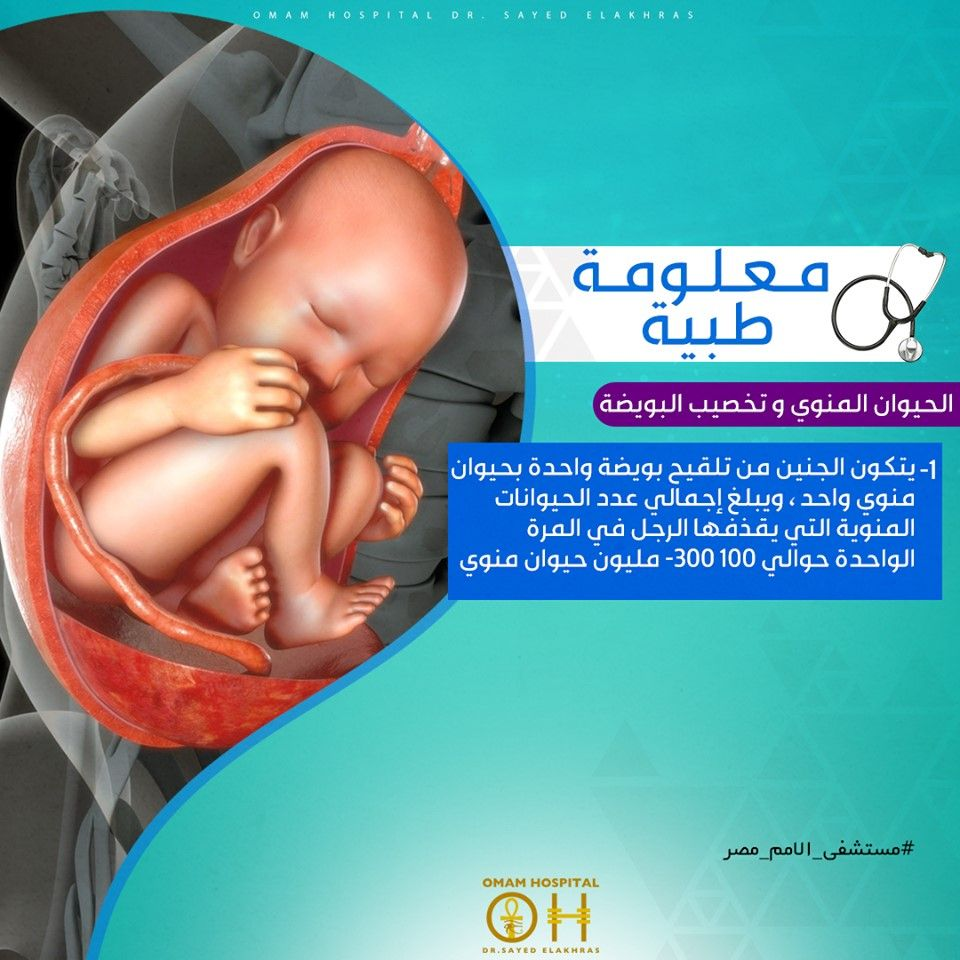 معلومة طبية الحيوان المنوي و تخصيب البويضة يتكون الجنين من تلقيح بويضة واحدة بحيوان منوي واحد ويبلغ إجمالي عدد الحيوانات المنوية التي Hospital The 100