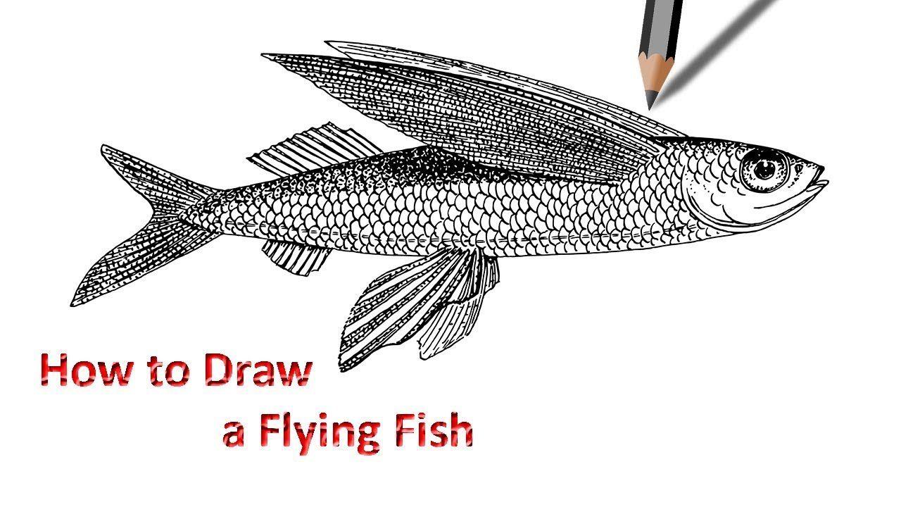 Draw A Flying Fish Fish Fish Art Fish Drawings