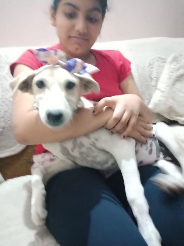 Adopt Pari Indian Pariah Dog On Dogs Dog Adoption Whippet Mix