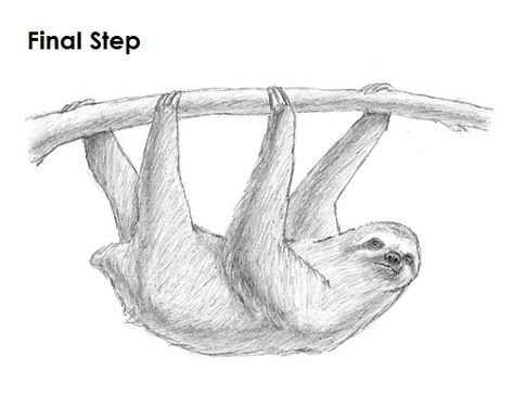 sloth how to draw