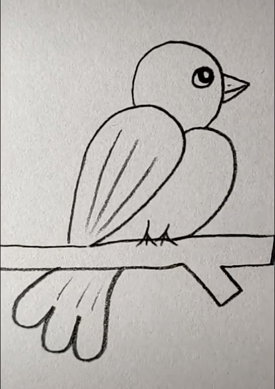 Bird Drawing Easy - More Ideas at our