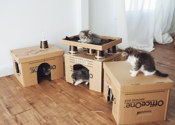 Diy Cat Furniture Cardboard U003cbu003ediy Cardboardu003c/bu003e Box Homes And