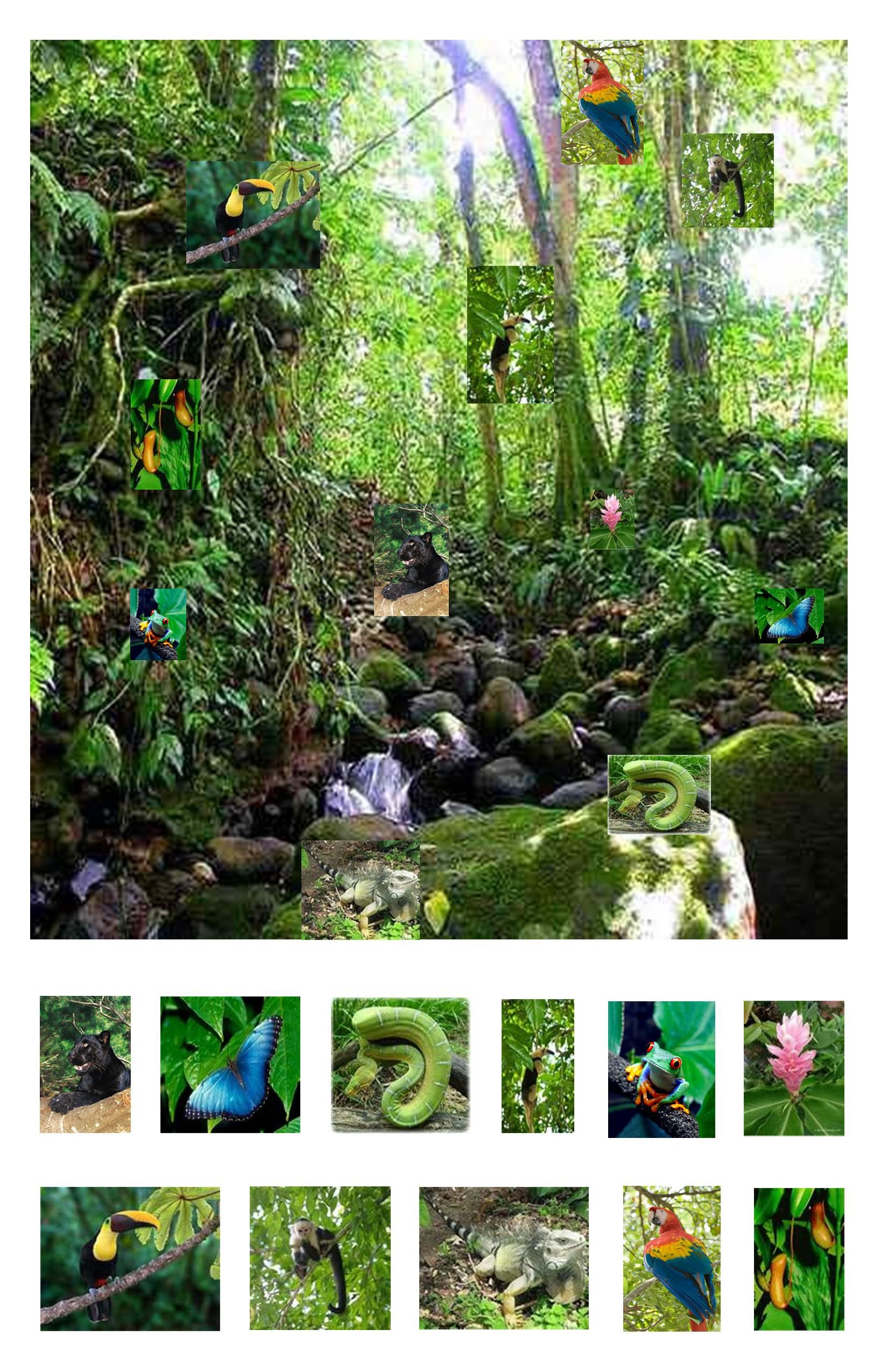 Rainforest I Spy Laminated So Items Can Be Circled With A