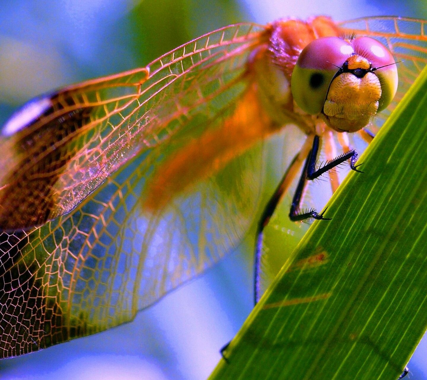 Pin By Cassy Chester On Insects Amphibians And Reptiles