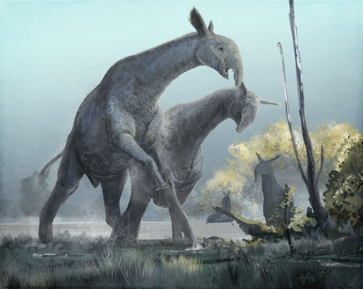 Paraceratherium | Mammals, Prehistoric animals, Ancient ...