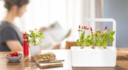 Review Of Kickstarter Funded Click And Grow Smart Garden 640 x 480