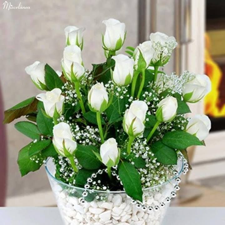 white tulips to me, signify pure and simple beauty, the essence of hope