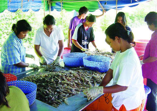 Bài học từ ngành tôm Thái Lan