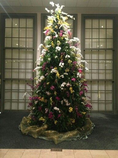 Orchid Christmas Tree.Orchid Christmas Tree Daniel Stow Botanical Gardens Nc
