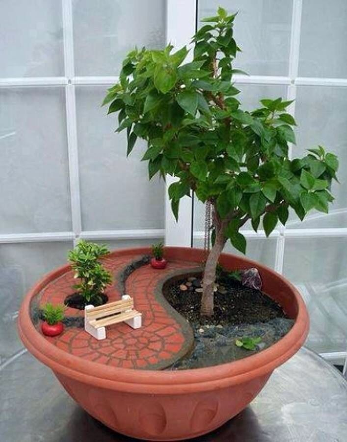 Minijardines JARDINERIA Pinterest Bonsai, Gardens and Fairy