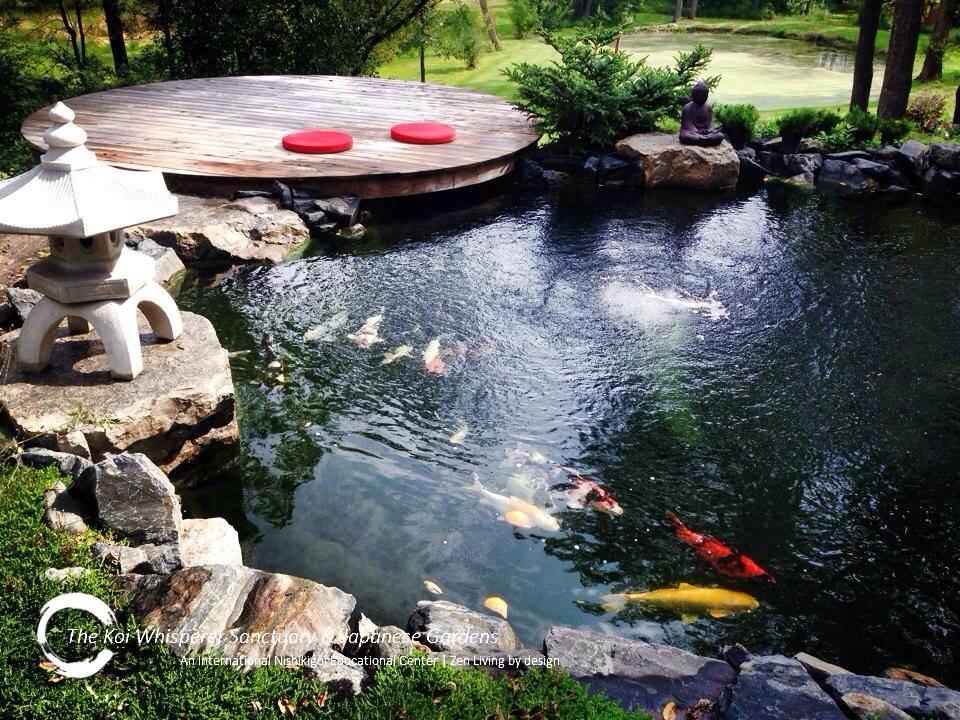 b8e1ac03c3b725287eb730bcae8161e8 - The Koi Whisperer Sanctuary & Japanese Gardens