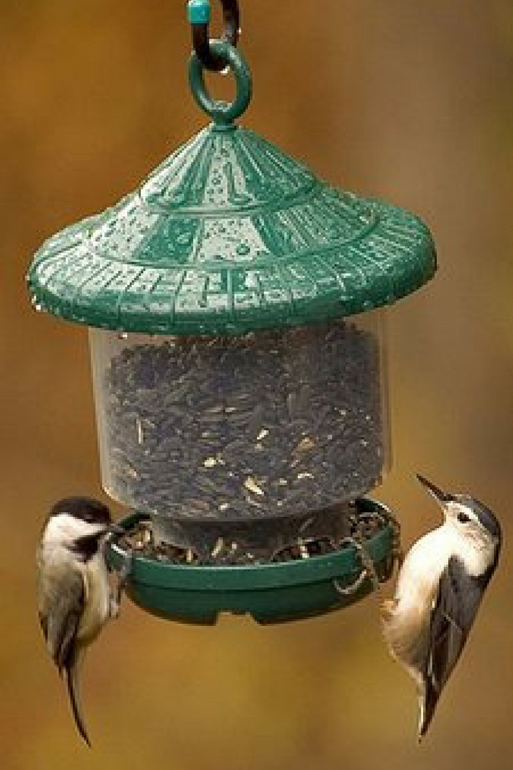 Pin On Wild Bird Houses And Feeders
