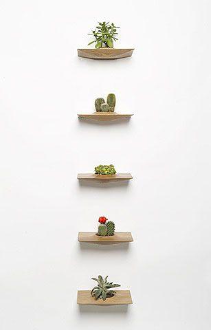 plantas_macetas