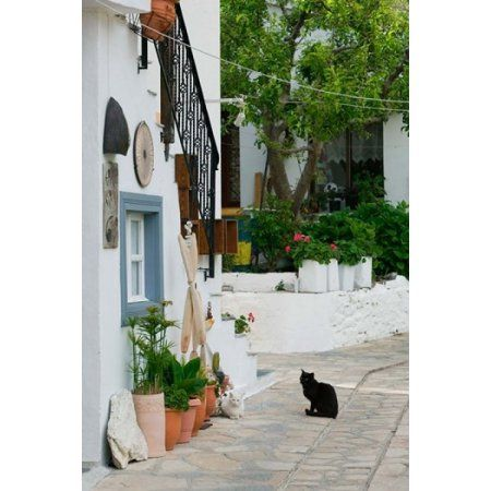 Street View with Black Cat Manolates Samos Aegean Islands Greece Canvas Art - Walter Bibikow DanitaDelimont (24 x 36)