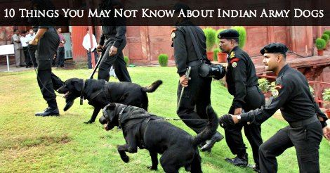 Here are some lesser known facts about military dogs in India.