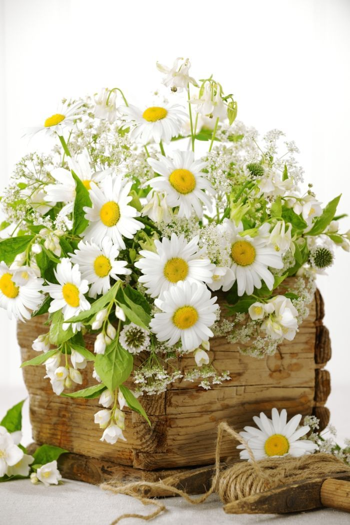 Torbjorn Skogedal - flower_bouquet_0906140522l.JPG | Daisys ...