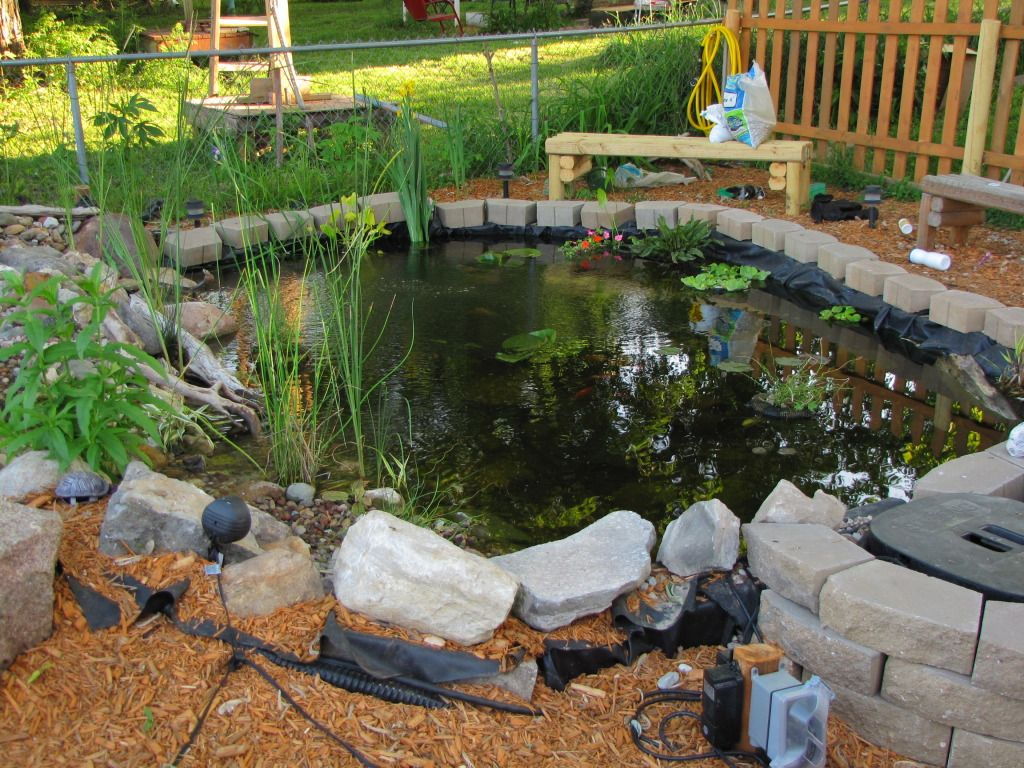 Red Ear Slider Outdoor Habitat Also Could Use As Outdoor